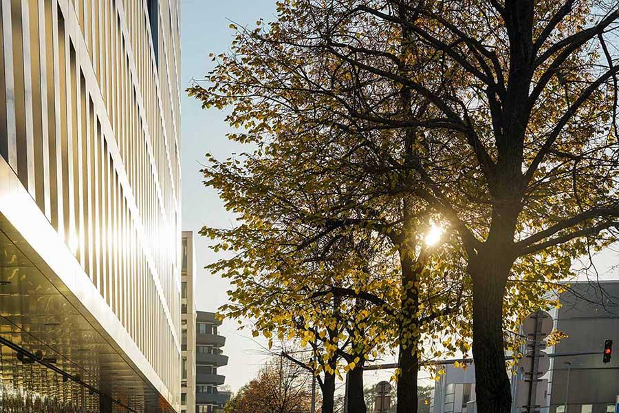 Gebäudefront der Hausverwaltung convival im Sonnenuntergang